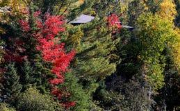 Träd och sidor på indisk sommar, Quebec, Kanada Arkivbild