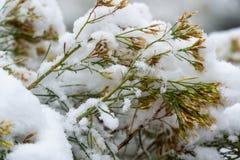 Träd och sidor som täckas i insnöad vinter arkivbild