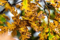 Träd och sidor under nedgånghöst efter regn royaltyfria foton