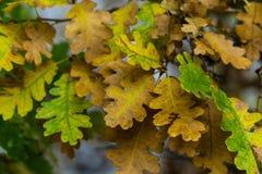 Träd och sidor under nedgånghöst efter regn royaltyfri fotografi
