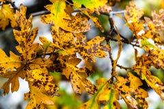 Träd och sidor under nedgånghöst efter regn royaltyfri foto