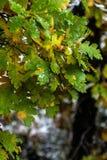 Träd och sidor under nedgånghöst efter regn arkivfoton