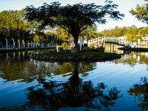 Träd och sjö i São Lourenço Arkivfoton