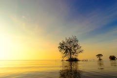 Träd och sjö under soluppgång Royaltyfri Bild