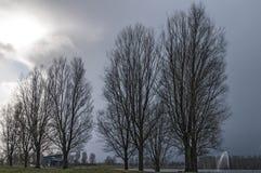 Träd och sjöanseende nära en sjö royaltyfri foto