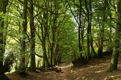 Träd och skogsmarkbana i England Arkivbilder