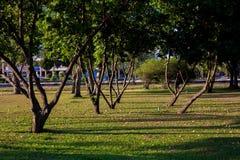 Träd och skugga arkivfoto