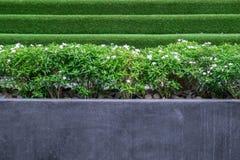 Träd och små vita blommor i en stor betong eller marmorkrukor parkerar offentligt Royaltyfria Foton