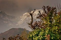 Träd och snöig berg och att trekking till Annapurnaen royaltyfri fotografi