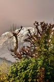 Träd och snöig berg och att trekking till Annapurnaen arkivbild