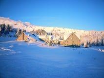 Träd och snön arkivbilder