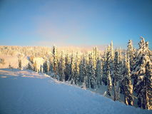 Träd och snön arkivfoton