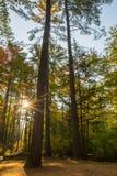 Träd och sol Arkivfoto
