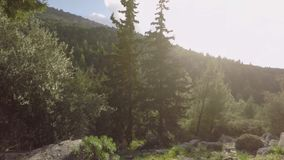 Träd och solljus lager videofilmer
