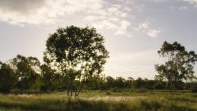 Träd och solskott stock video
