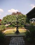 Träd och springbrunn Arkivbilder