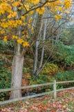 Träd och staket 2 royaltyfri foto