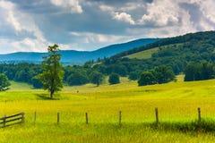 Träd och staket i ett fält och kullar i den lantliga Potomacen Highlan royaltyfri bild