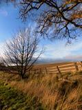 Träd och staket, i norr Northumberland, England UK Arkivbilder