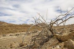 Träd och stenar Fotografering för Bildbyråer