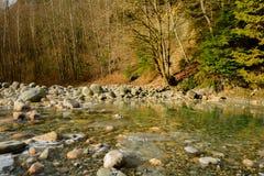 Träd och stenar på Lynn Creek royaltyfri foto