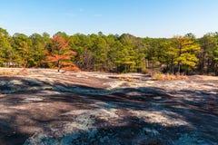 Träd och stenjordning i stenberg parkerar, Georgia, USA Royaltyfri Foto