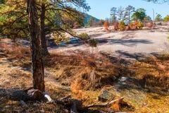 Träd och stenjordning i stenberg parkerar, Georgia, USA Arkivfoto