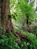 Träd och ström Arkivfoto