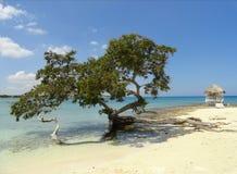 Träd och strand Arkivbild