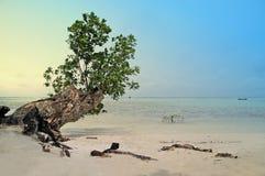 Träd och strand Arkivfoton
