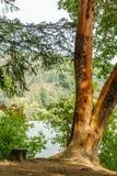 Träd och stubbe i träna på kusten av sjön royaltyfri fotografi