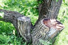Träd och stubbe på bakgrund för grönt gräs arkivbild