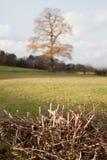 Träd och taggar Arkivfoto