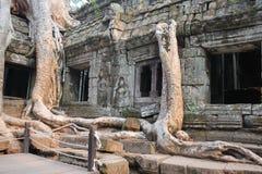 Träd och templet till och med tjockleken av århundradet Royaltyfri Fotografi