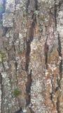 Träd och texturer Fotografering för Bildbyråer