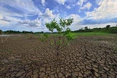 Träd och torka förtorkad jordning royaltyfria foton
