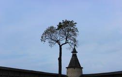 Träd och torn, fästning i Pskov Arkivfoto