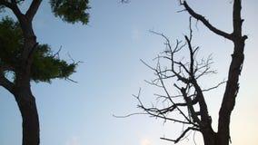 Träd och träd Arkivfoto