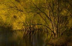 Träd- och träskreflexioner lantliga Ontario Kanada för gul guld royaltyfria bilder