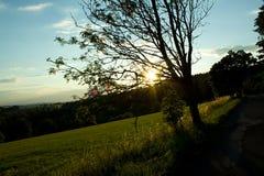 Träd och väg i solnedgång Arkivfoto
