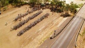 Träd och väg med cyklar stock video