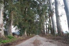 Träd och väg som stöttar bildandet av naturen arkivfoto