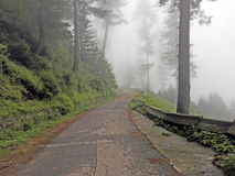 Träd och väg som täckas av moln royaltyfri foto