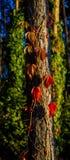 Träd- och växtplexus Arkivbilder