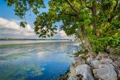 Träd och vaggar längs Potomacet River, i Alexandria, Virginia Royaltyfri Fotografi