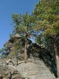 Träd och vaggar, naturlig terräng på Mount Rushmore den nationella minnesmärken, slutsten, SD Arkivbild
