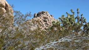 Träd och vaggar på den Joshua Tree nationalparken i Kalifornien lager videofilmer