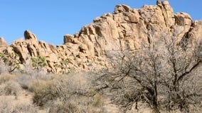 Träd och vaggar på Joshua Tree i Kalifornien arkivfilmer