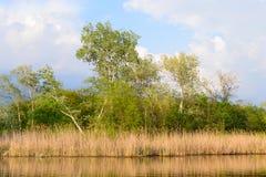 Träd och vasser på sjön, den djupa himlen arkivfoto