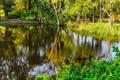 Träd och vattenreflexion Fotografering för Bildbyråer